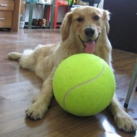 24cm Diameter Dog Tennis Ball Giant For Pet Chew Toy Inflatable Outdoor Tennis Ball Signature Mega Jumbo Pet Toy Train Ball